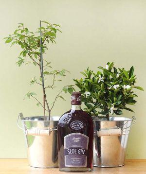 Sloe Gin Set