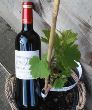 Grape growing gift set