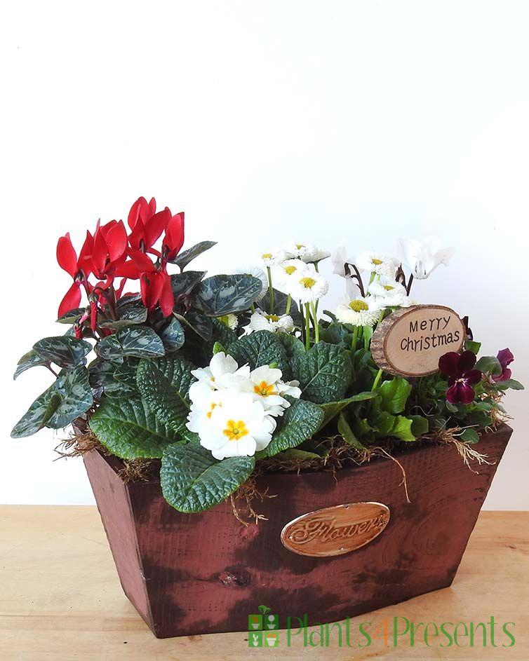 Festive planter