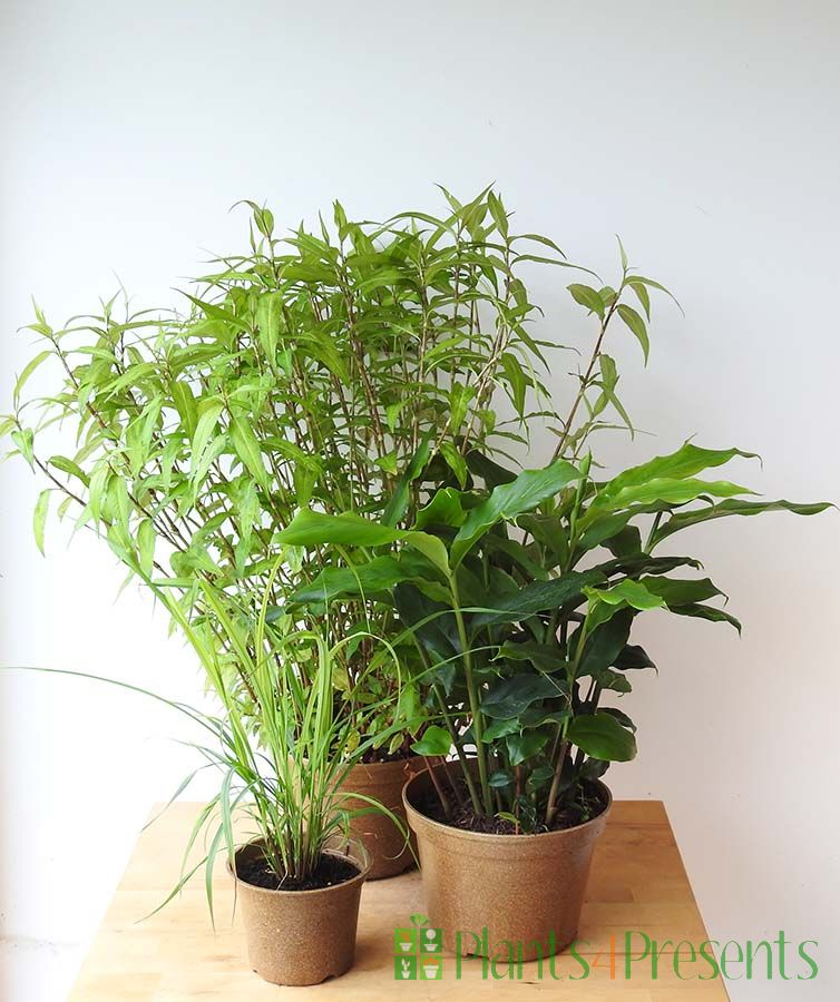Exotic Herb Collection