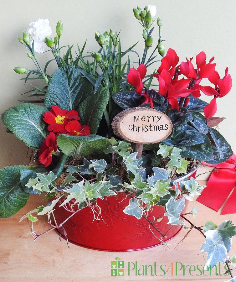 Festive Christmas bowl