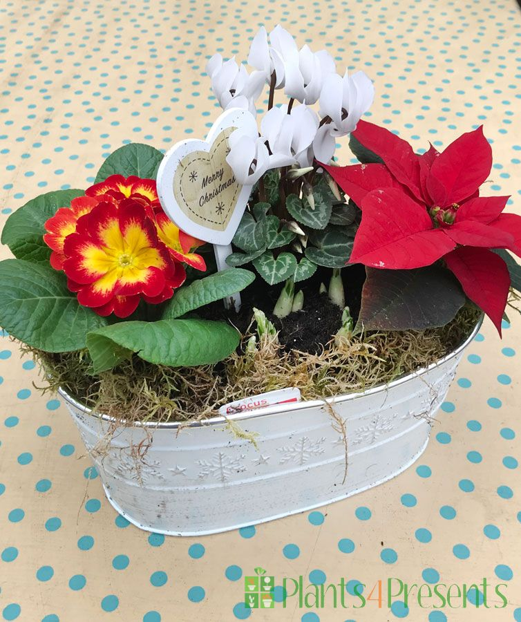 Festive indoor planter