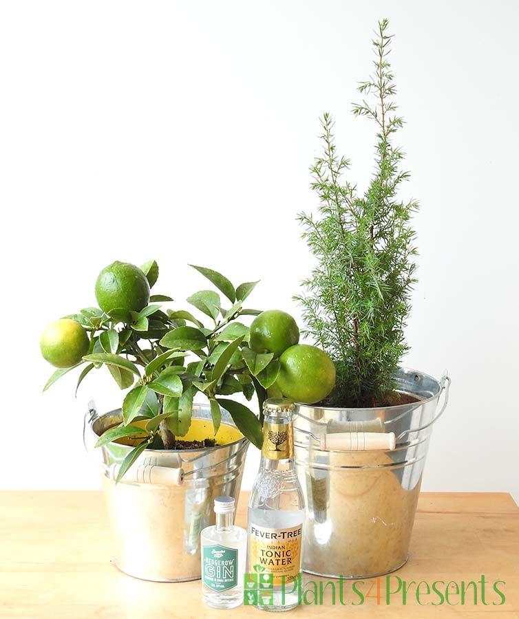 Gin and Juniper Gift Set