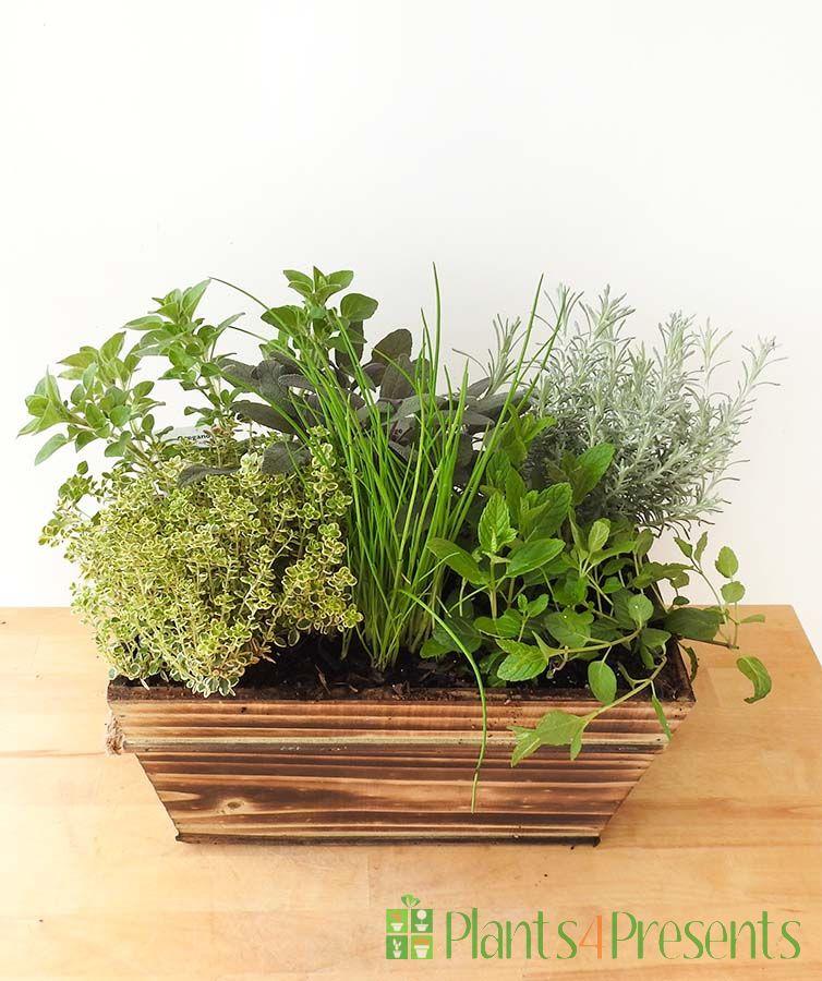 Dark wood herb planter