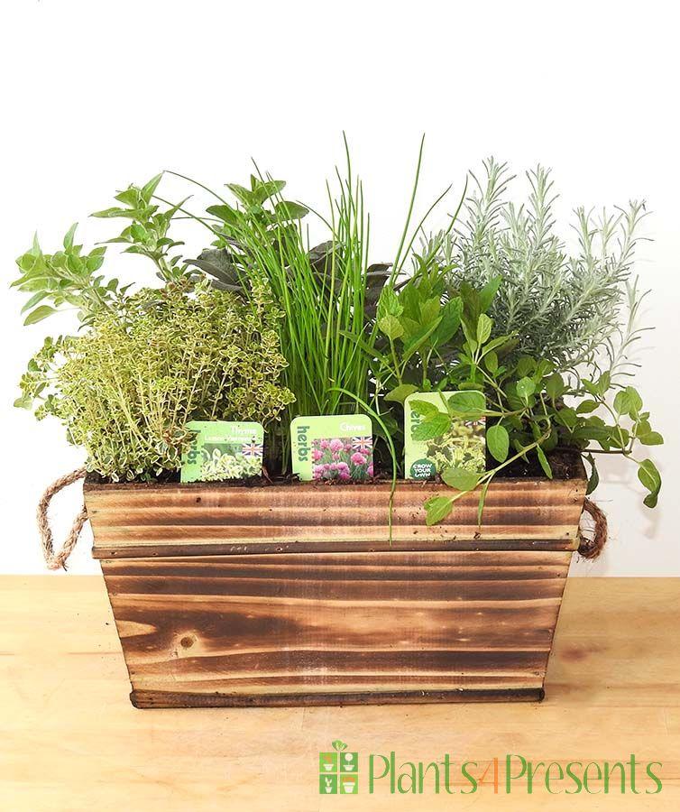 herbs 2020