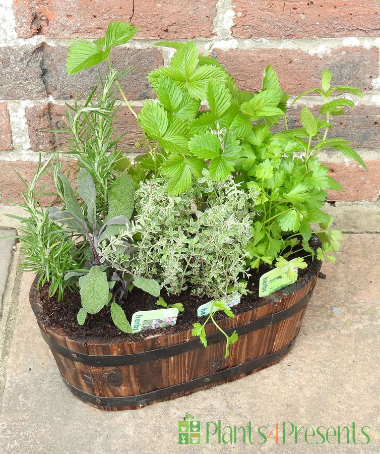 2020 Herb Planter Oval