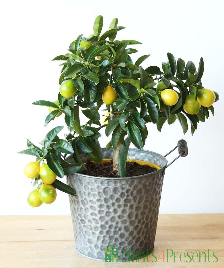 Lara Lemon