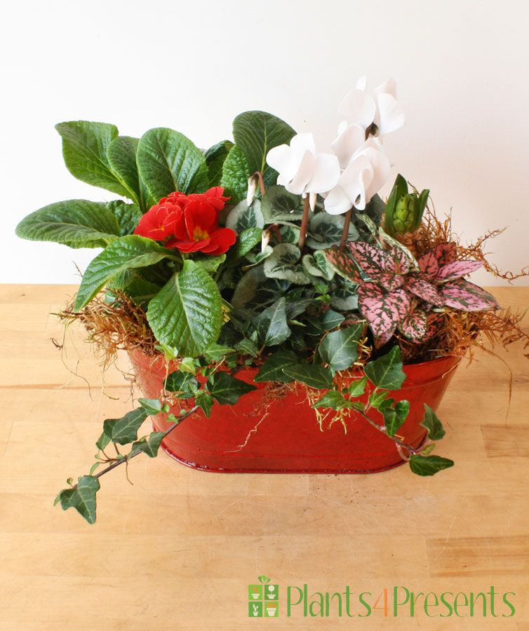 Ruby red planter