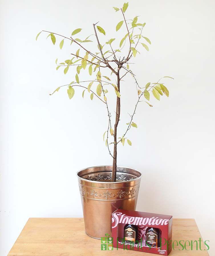 Sloe Whiskey Gift Set (Autumnal)