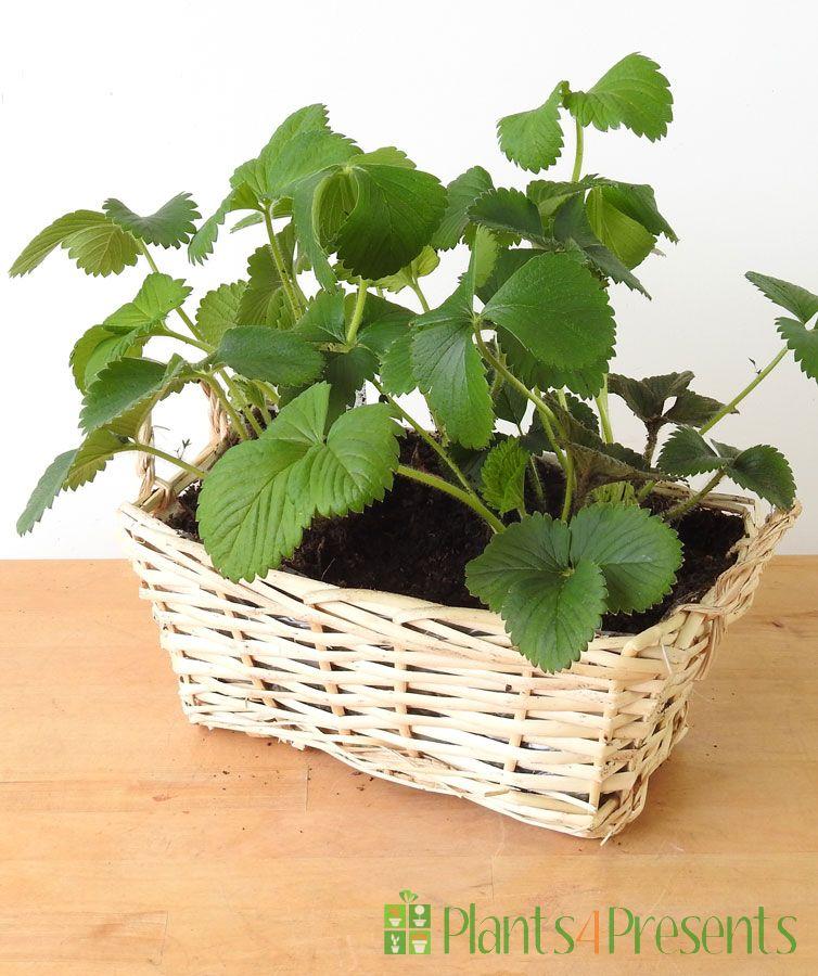 Strawberry Basket 2021