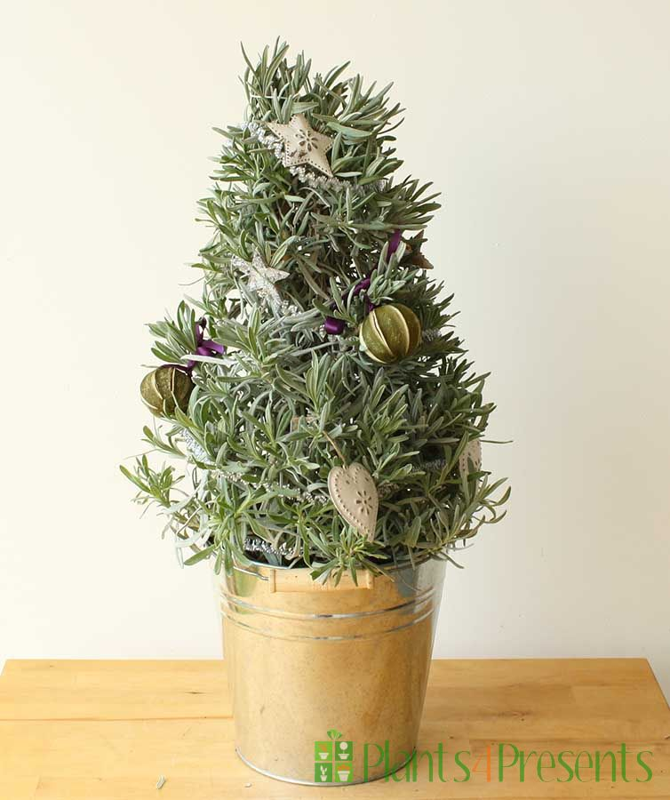 Christmas Lavender Tree