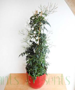 Plants Make Great Gifts At Plants4presents We Specialise