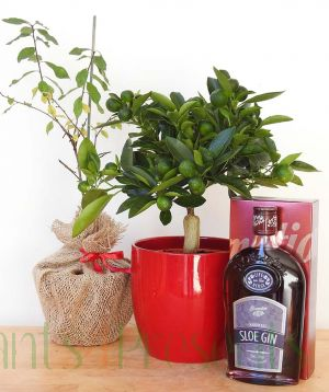 Sloe Gin Gift Set