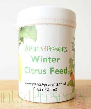 Winter Citrus Feed