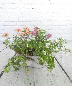 Indoor Planter