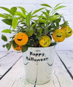 spooky citrus tree
