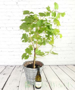 Sussex Vine and Wine
