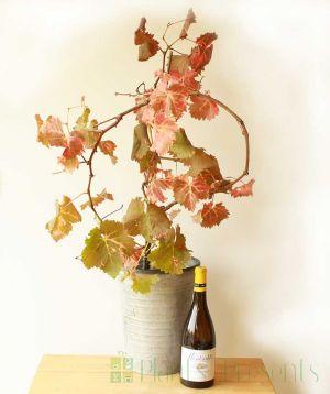 Vine and Wine Autumn Colour