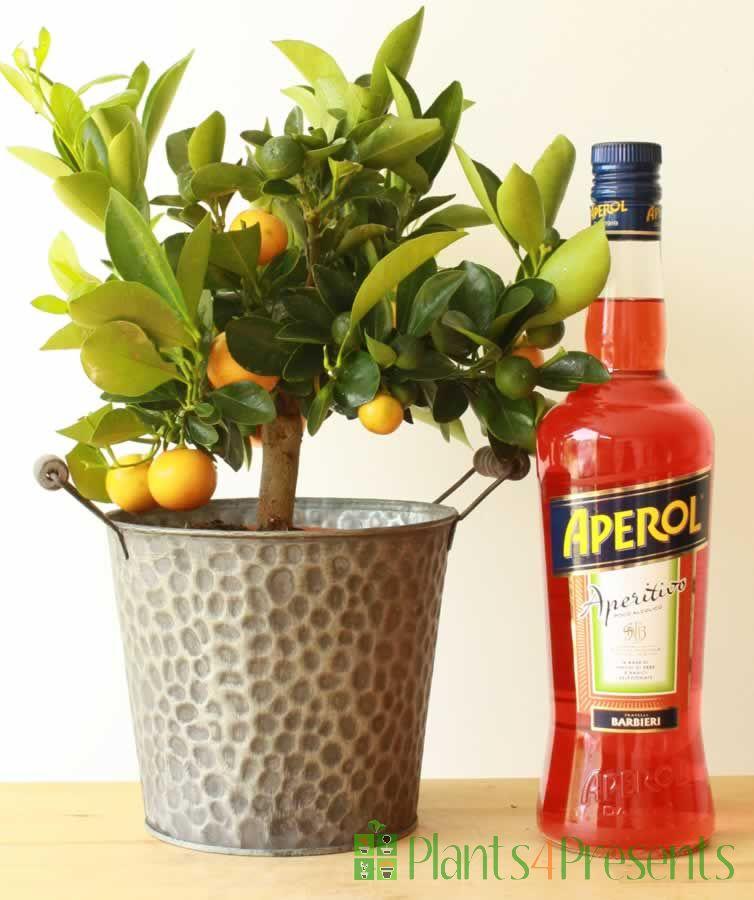 Aperol Gift Set