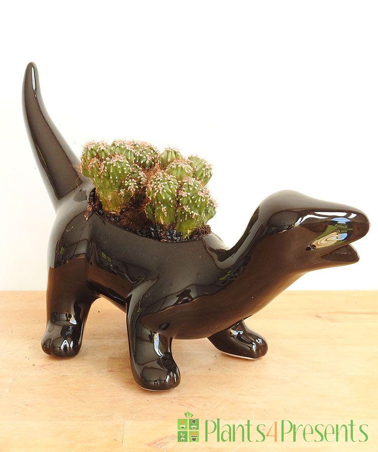 Dinosaur Succulent