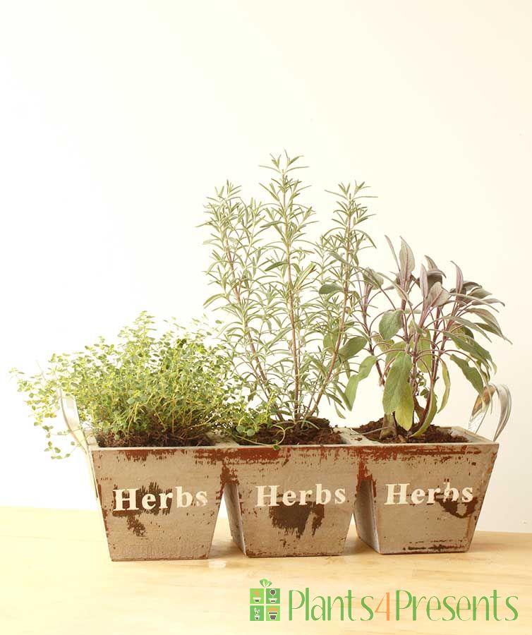 Herb trio