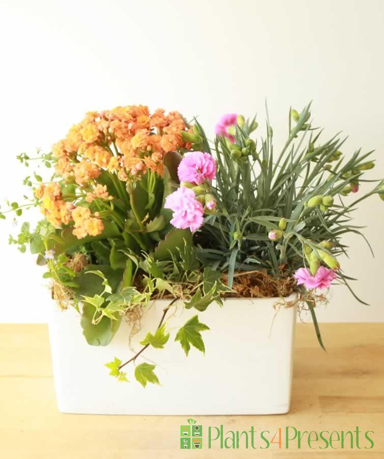 Latina Planter