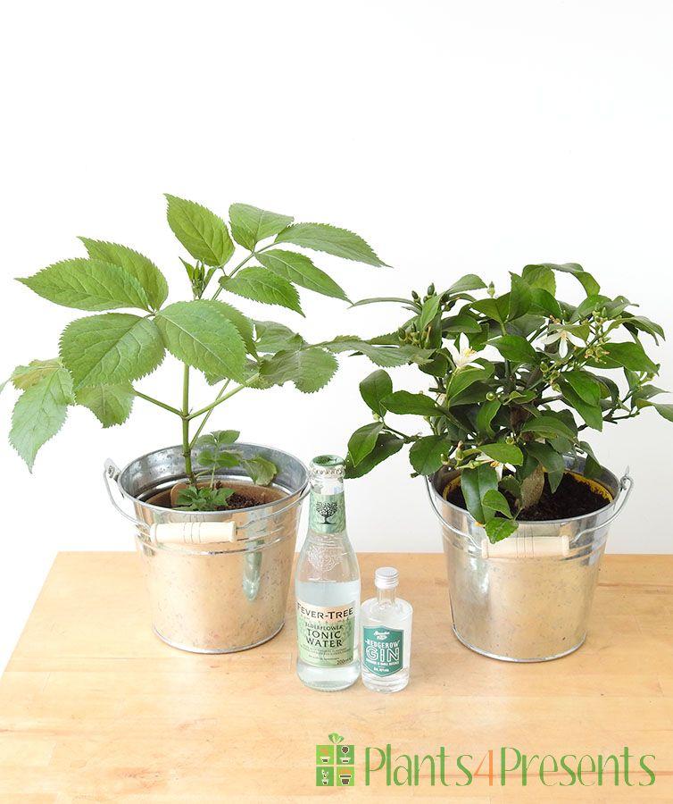Spring Gin Gift Set