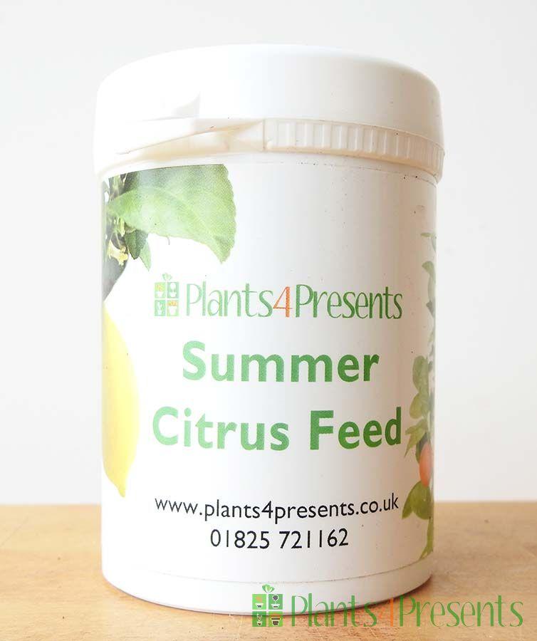 Citrus Feed SUMMER