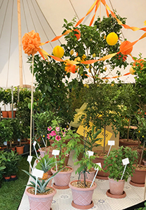 Plants4Presents in the Dig Marquee