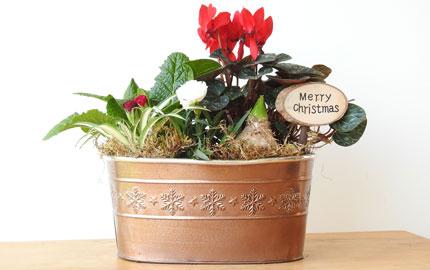 festive indoor planter