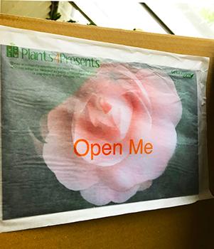 Glassine envelope