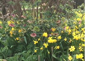 Great Dixter Garden in Spring