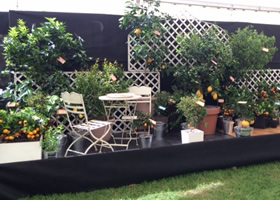 Our citrus display at Malvern RHS Spring Festival 2016