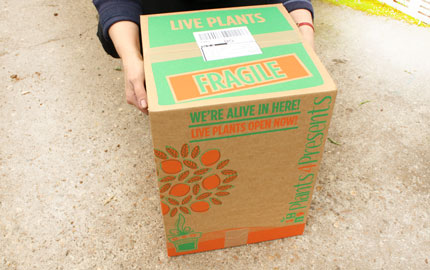 smaller boxes use less raw materials