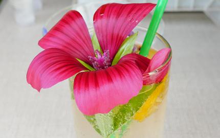 Summer Cooler cocktail