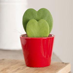 Plain Valentines Heart