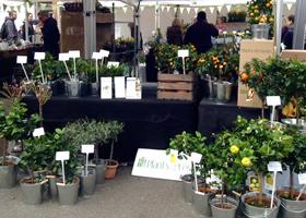 Wimbledon Farmers Market