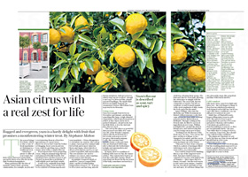 yuzu trees in the press